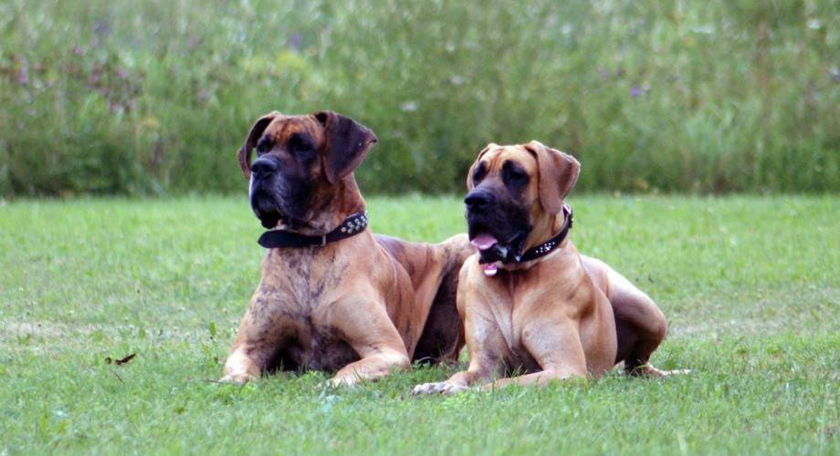 Hundeschule Altmühltal